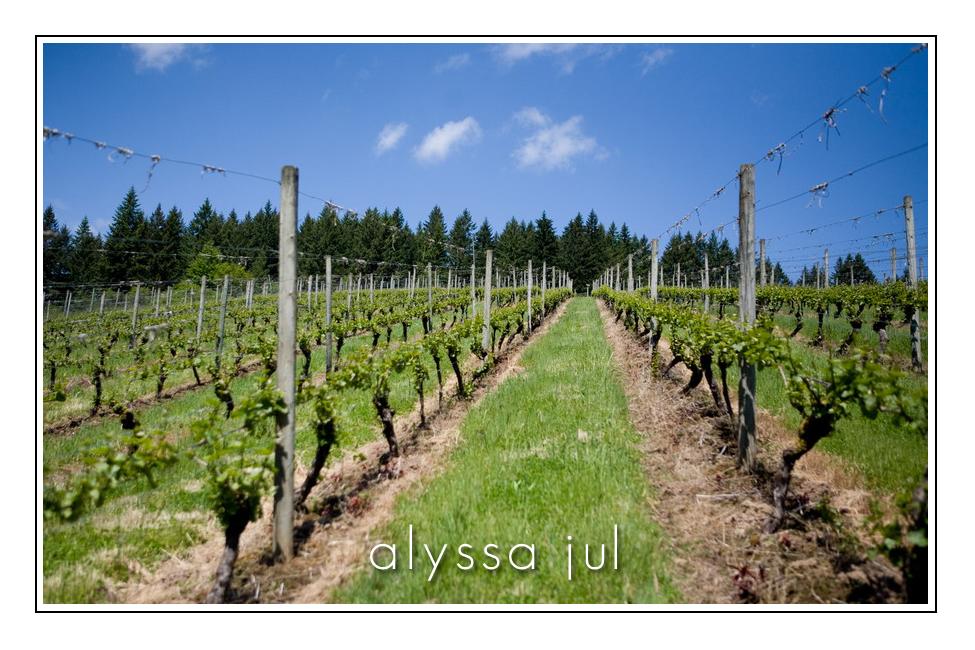 grapes-hillside