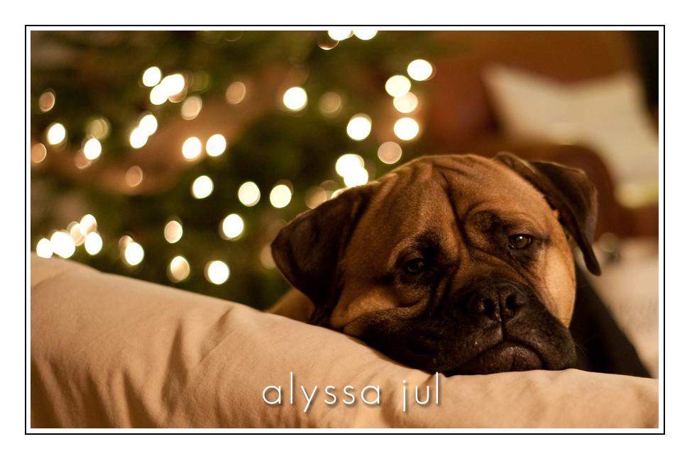 waylon-christmas